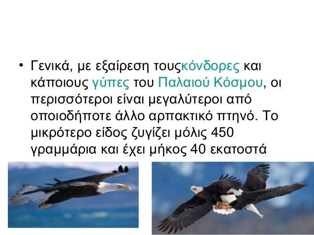 άτριχος παίρνει μεγάλο πουλί