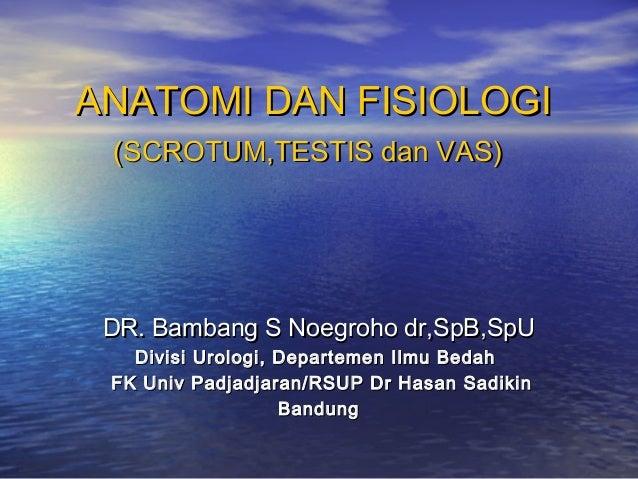 ANATOMI DAN FISIOLOGIANATOMI DAN FISIOLOGI (SCROTUM,TESTIS dan VAS)(SCROTUM,TESTIS dan VAS) DR. Bambang S Noegroho dr,SpB,...