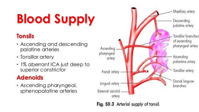 2. adenoid enlargement