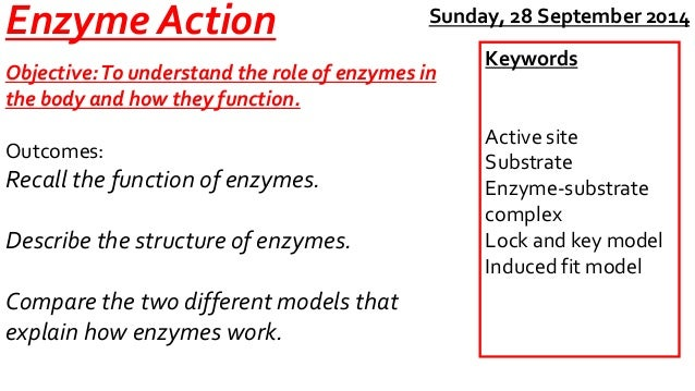Enzyme Action  Objective: To understand the role of enzymes in  the body and how they function.  Outcomes:  Recall the fun...