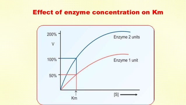 the effect of enzyme concentration on Several factors affect the rate of an enzyme catalyzed reaction among these are enzyme concentration, substrate concentration, temperature and ph besides, some molecules (activators) increase.