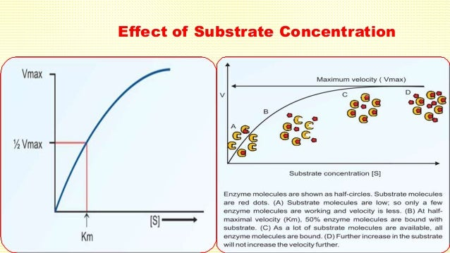 the effect of substrate concentration enzyme Best answer: well in any enzyme catalyzed reaction you have an enzyme and a substrate (that is the substance that the enzyme acts on) so for example, if you had the enzyme amylase which digests starch your substrate would be the starch and you would test the effect of enzyme concentration on the rate of reaction by keeping all other factors including the concentration of starch the same and.