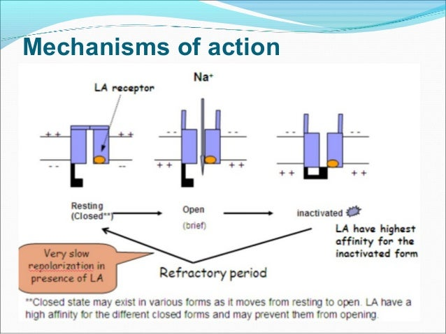 mechanism of action of local anesthetics pdf