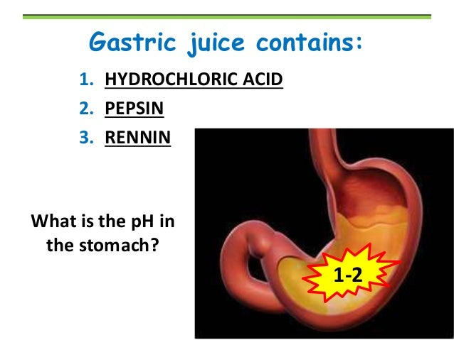 function of renin in stomach