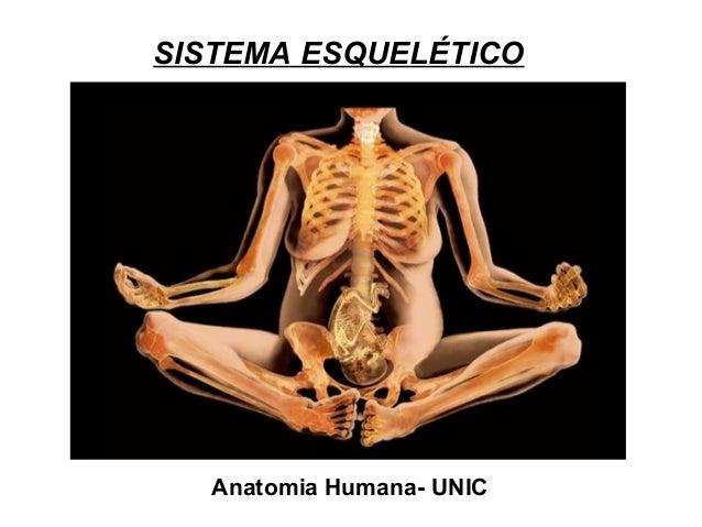 SISTEMA ESQUELÉTICO  Anatomia Humana- UNIC