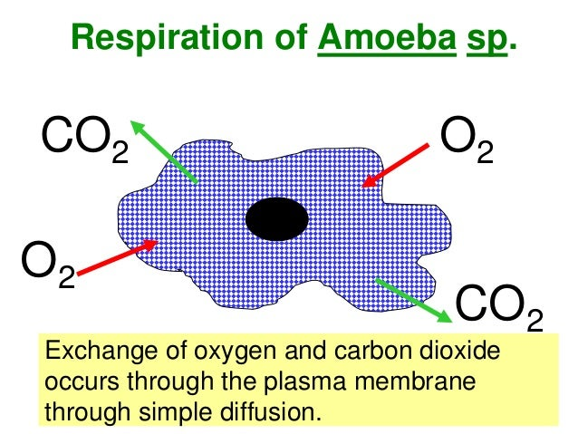 Biology form 4 chapter 2 part 2 cell organization 15 excretion of amoeba ccuart Choice Image