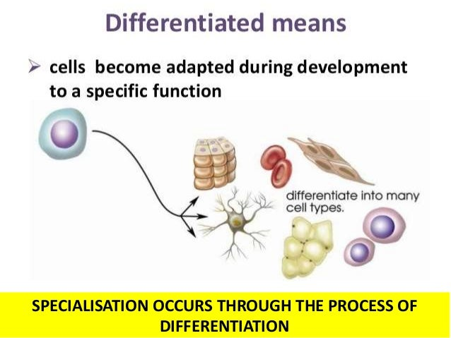 BIOLOGY FORM 4 CHAPTER 2 PART 2 - CELL ORGANIZATION