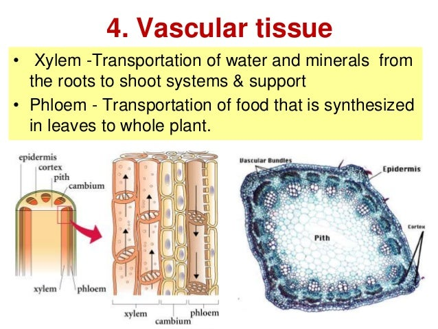 Biology Form 4 Chapter 2 Part 2 Cell Organization
