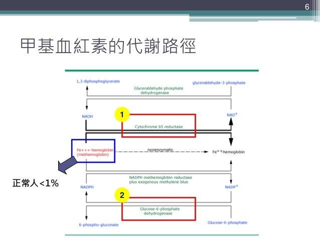 甲基血紅素的代謝路徑 6 正常人<1% 1 2
