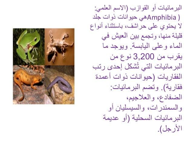القوازب أو البرمائيات(العلم االسمي: Amphibia )جلد ذوات حيوانات هي باستثناء ،حراشف على يحتوي ا...