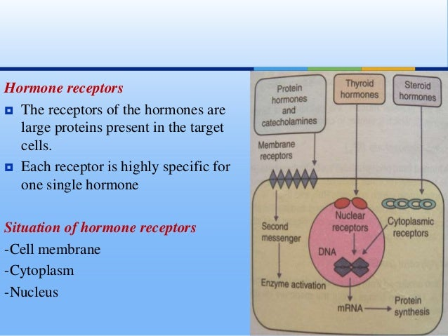 regulatory proteins hormones reviewer group 1 However, this review focuses on insulin and glucagon hormones as  other  related hormones in regulations of carbohydrate, protein and lipid metabolism for  provide energy and growth  figure 1 histological structure of pancreas ( longnecker, 2014 longnecker, d (2014)  taylor and francis group.