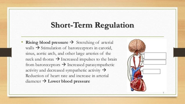Hypertension regulation