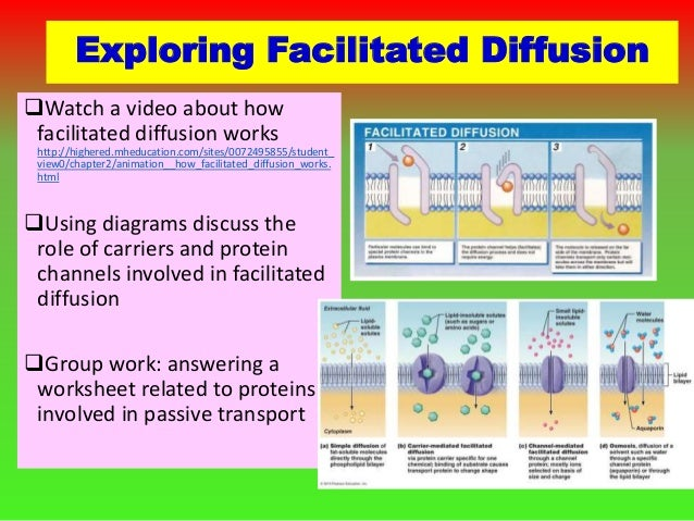 Worksheets Facilitated Diffusion Worksheet Answers 2 1 how to teach a concept e 17 exploring facilitated diffusion