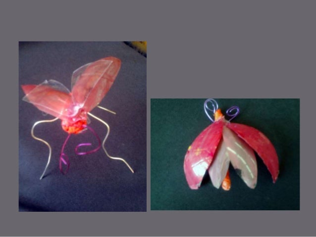 The insect project.