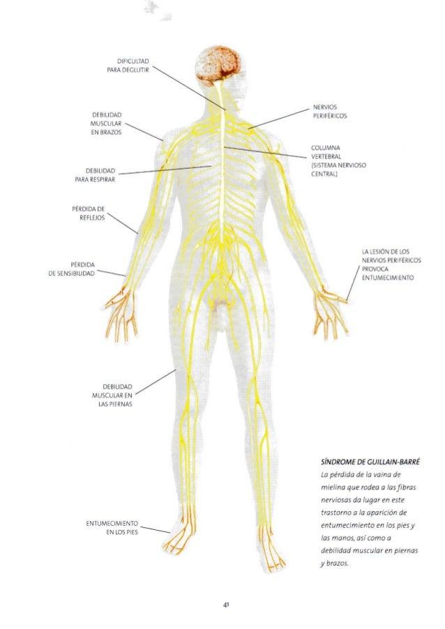 Lujo Los Nervios Del Pie Composición - Imágenes de Anatomía Humana ...