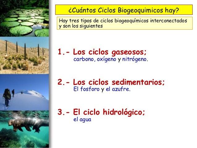 2. interaccion entre seres vivos cadena trofica-ciclo biogeoquimico …
