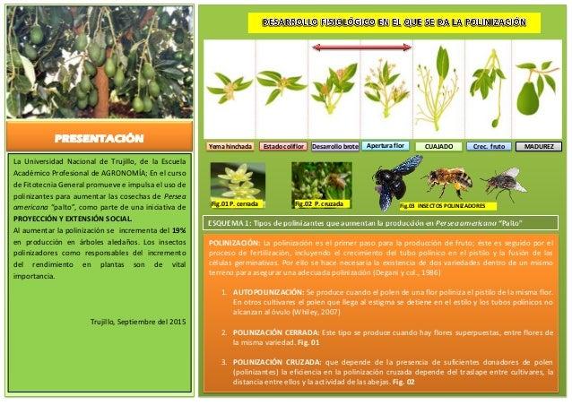POLINIZACIÓN: La polinización es el primer paso para la producción de fruto; éste es seguido por el proceso de fertilizaci...