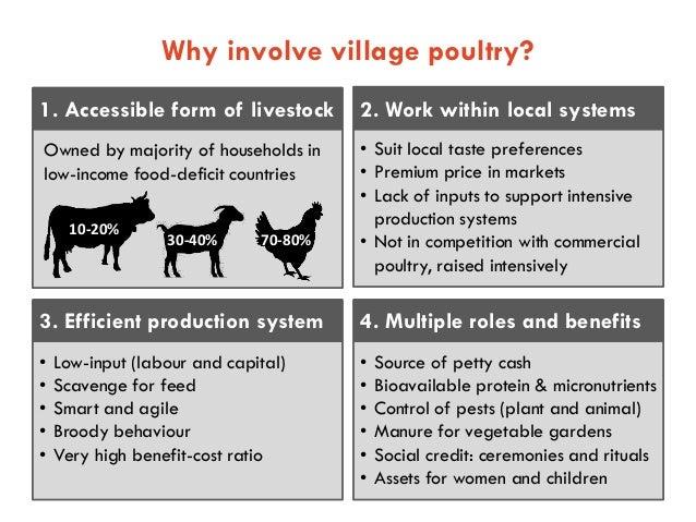 23 Village Chicken And Egg Value Chains 2015 08 18