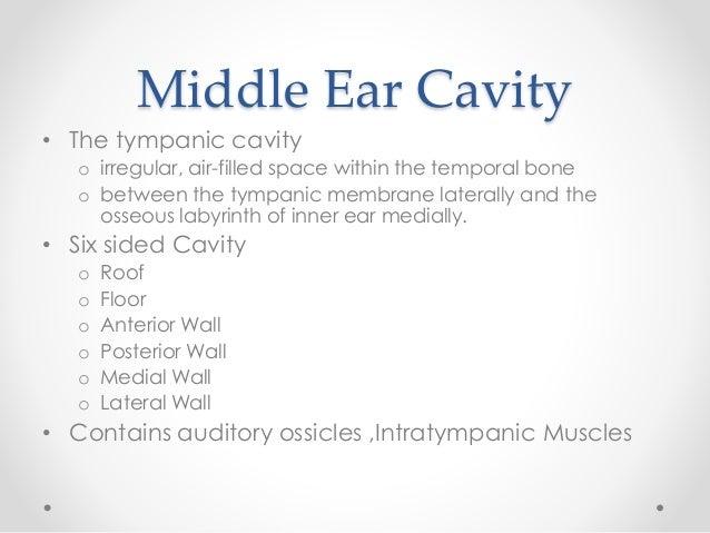 Anatomy of middle ear | 638 x 479 jpeg 51kB