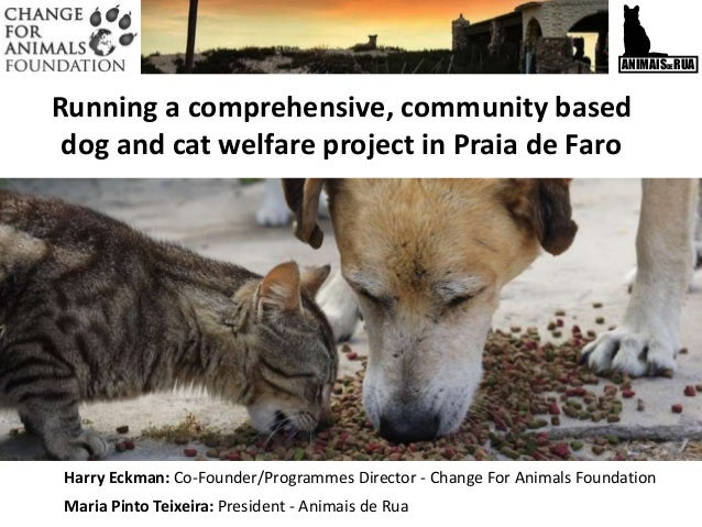 ANIMAISDERUA Running a comprehensive, community based dog and cat welfare project in Praia de Faro Harry Eckman: Co-Founde...