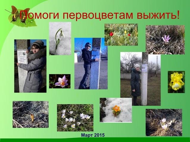 Помоги первоцветам выжить! Март 2015