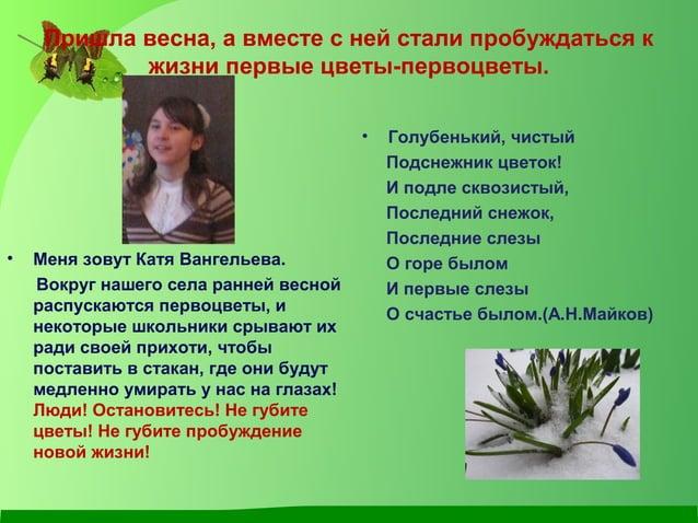 Пришла весна, а вместе с ней стали пробуждаться к жизни первые цветы-первоцветы. • Меня зовут Катя Вангельева. Вокруг наше...