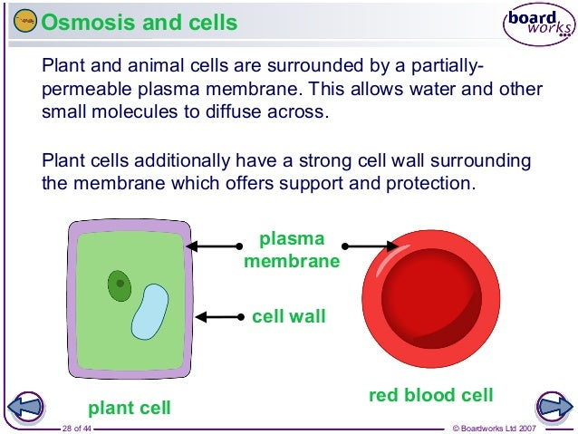 Movement In And Out Of Cells