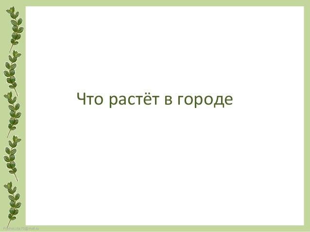 FokinaLida.75@mail.ru Что растёт в городе