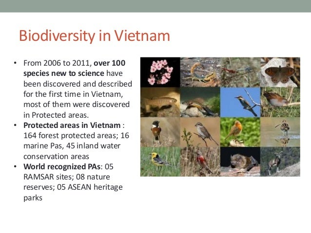 biodiversity and natural resources essay Short essay on conservation of biodiversity  and maintenance of biological diversity and of natural and associated cultural resources and managed through legal or.