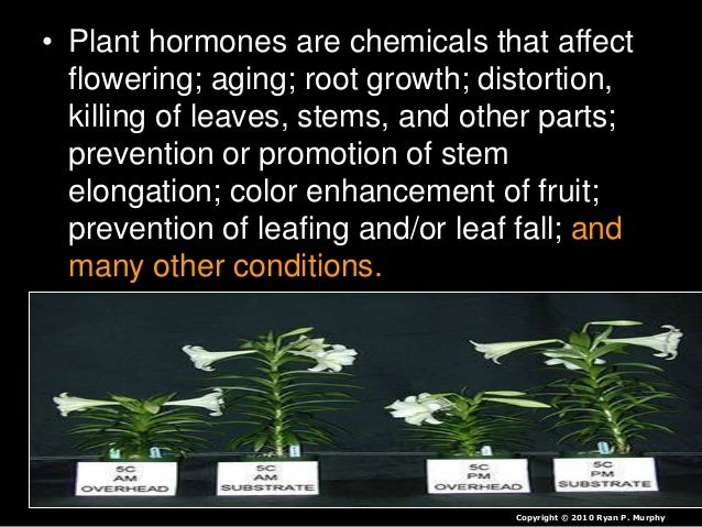 coordination and response in plants 16w3gmz Plant responses tropism is a biological phenomenon, indicating growth or turning movement of a biological organism, usually a plant, in response.