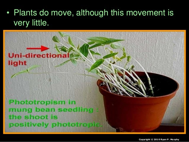 coordination and response in plants 16w3gmz Plant responses tropism is a biological phenomenon, indicating growth or turning movement of a biological organism, usually a plant, in response to an environmental stimulus in tropisms, this response is dependent on the direction of the species the word tropism comes from the greek trope (to turn or to change) tropisms are.