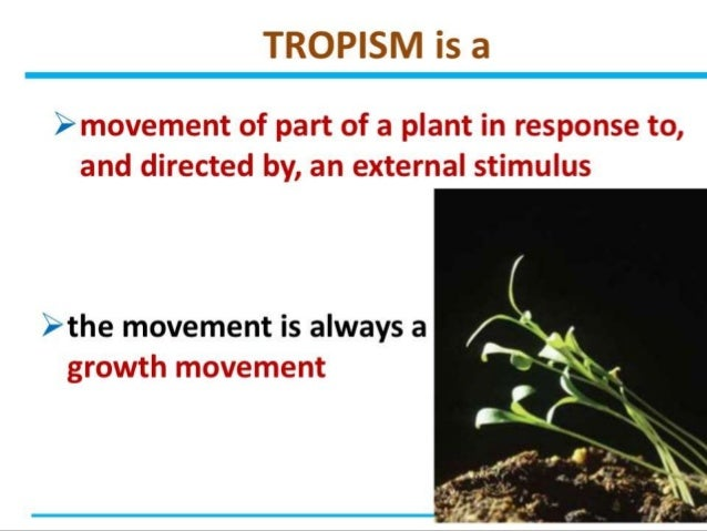 coordination and response in plants 16w3gmz Revise how hormones promote growth within plants for gcse biology, aqa  to  light and gravity, and the role of auxins in controlling and coordinating plant  growth  in the plant root, responses to light are known as a negative  phototropism,.