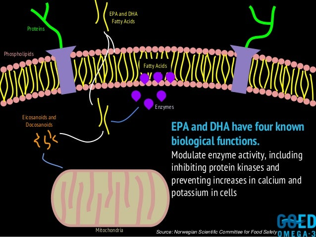 Source: Norwegian Scientific Committee for Food Safety Proteins Phospholipids Fatty Acids EPA and DHA have four known biol...