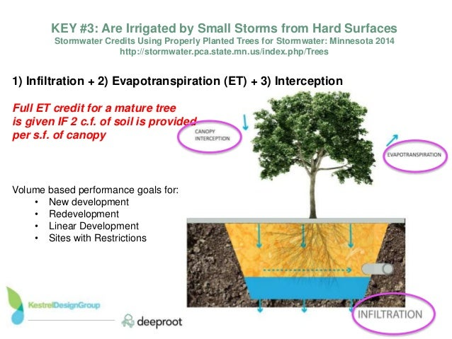 ... Surfaces; 12.  sc 1 st  SlideShare & State of the Science using Trees for Sotrmwater Management.