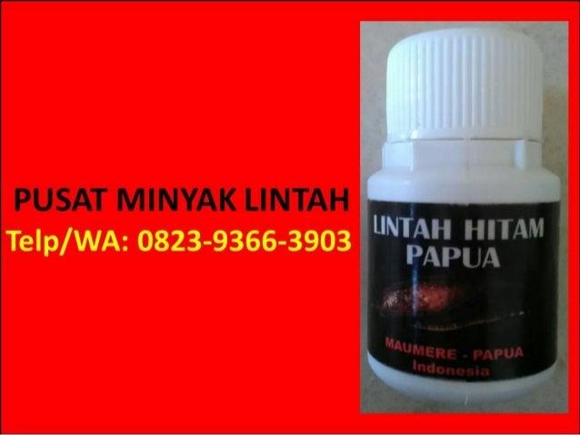 hp wa 0823 9366 3903 jual minyak lintah chc di apotik minyak lintah