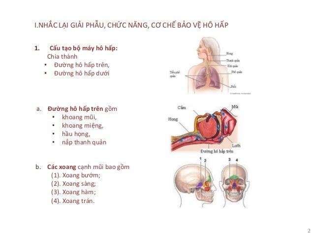 2 I.NHẮC LẠI GIẢI PHẪU, CHỨC NĂNG, CƠ CHẾ BẢO VỆ HÔ HẤP 1. Cấu tạo bộ máy hô hấp: Chia thành • Đường hô hấp trên, • Đường ...