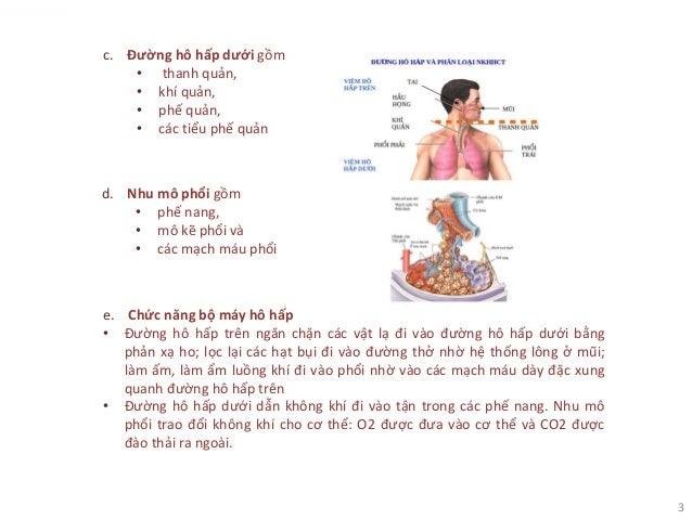 3 c. Đường hô hấp dưới gồm • thanh quản, • khí quản, • phế quản, • các tiểu phế quản d. Nhu mô phổi gồm • phế nang, • mô k...