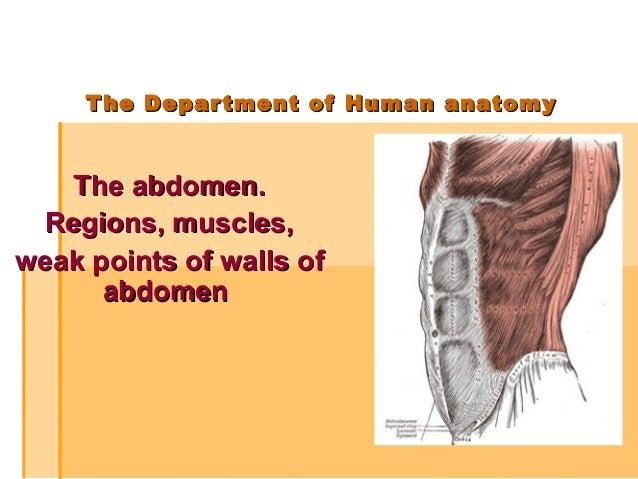 The Abdomen Regions Muscles Weak Points Of Walls Of Abdomen