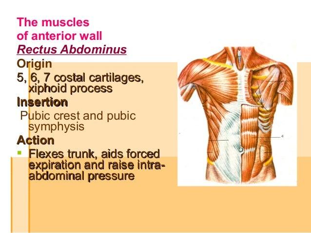 The abdomen. Regions, muscles, weak points of walls of abdomen