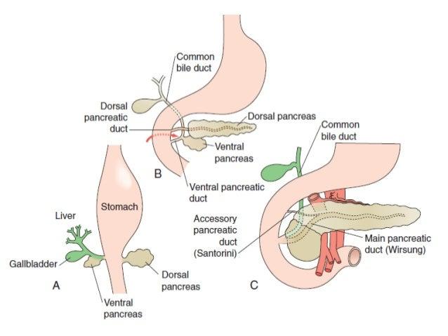 Gan Túi mật Ống TM OMC Tá tràng Tụy Ống tụy Ống gan chung Ống gan phải và trái Kênh chung mật tụy