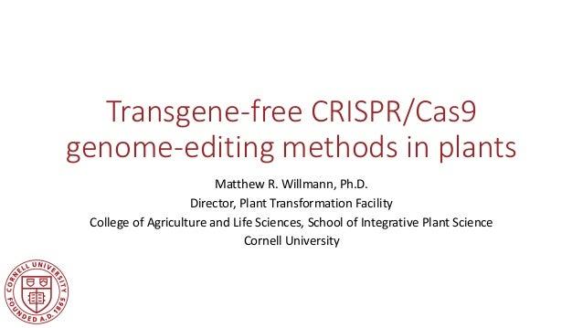 Transgene-free CRISPR/Cas9 genome-editing methods in plants Matthew R. Willmann, Ph.D. Director, Plant Transformation Faci...