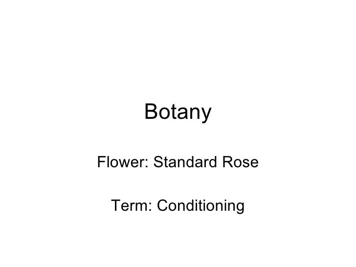 Botany Flower: Standard Rose Term: Conditioning