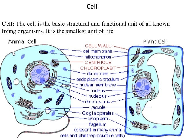 Cell Cell: The cell is the basic structural and functional unit of all known living organisms. It is the smallest unit of ...