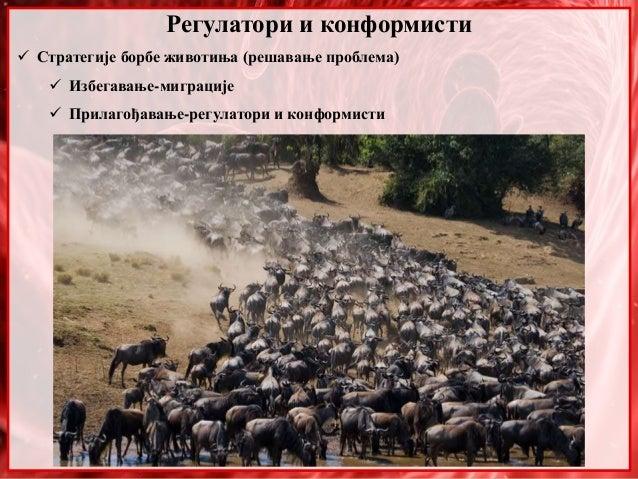 Регулатори и конформисти  Стратегије борбе животиња (решавање проблема)  Избегавање-миграције  Прилагођавање-регулатори...