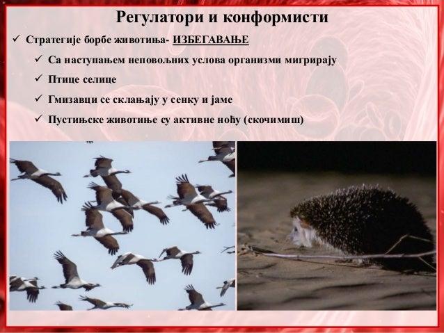 Регулатори и конформисти  Стратегије борбе животиња- ИЗБЕГАВАЊЕ  Са наступањем неповољних услова организми мигрирају  П...