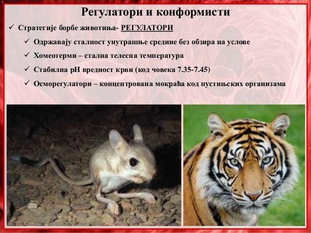 Регулатори и конформисти  Стратегије борбе животиња- РЕГУЛАТОРИ  Одржавају сталност унутрашње средине без обзира на усло...
