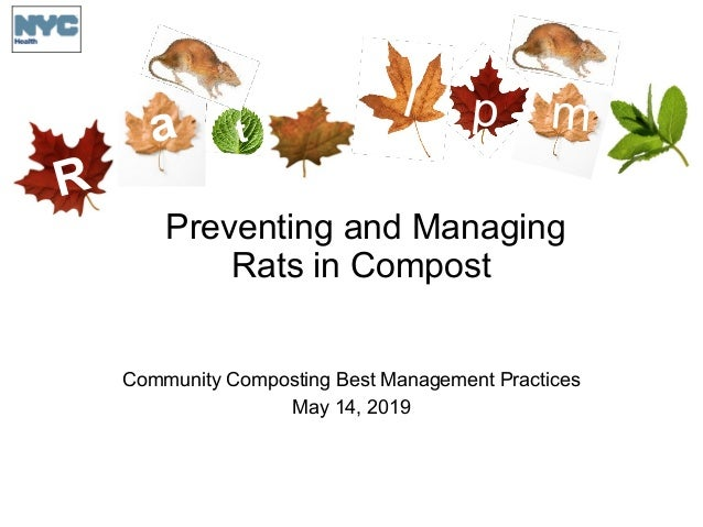 R a t I p m Preventing and Managing Rats in Compost Community Composting Best Management Practices May 14, 2019