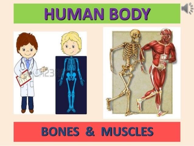 HUMAN BODY BONES & MUSCLES