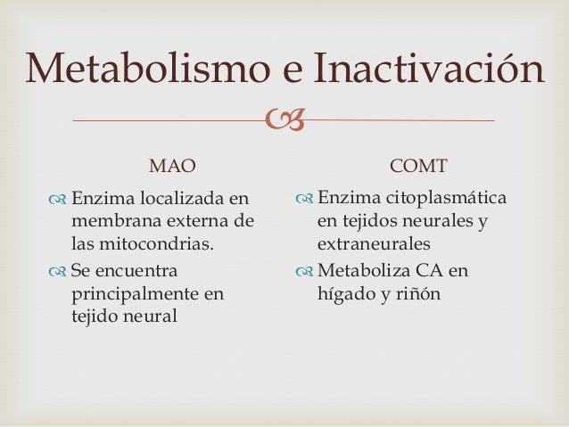 Metabolismo e Inactivación                                         Conjugación• CA y sus metabolitos pueden ser conjugado...