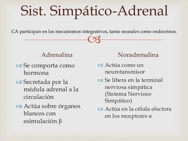 Sist. Simpático-Adrenal              Sistema Nervioso Simpático y Médula Adrenal= unidad anatómica y fisiológicaEncargado...